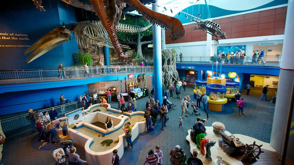 Discount coupons for ripleys aquarium