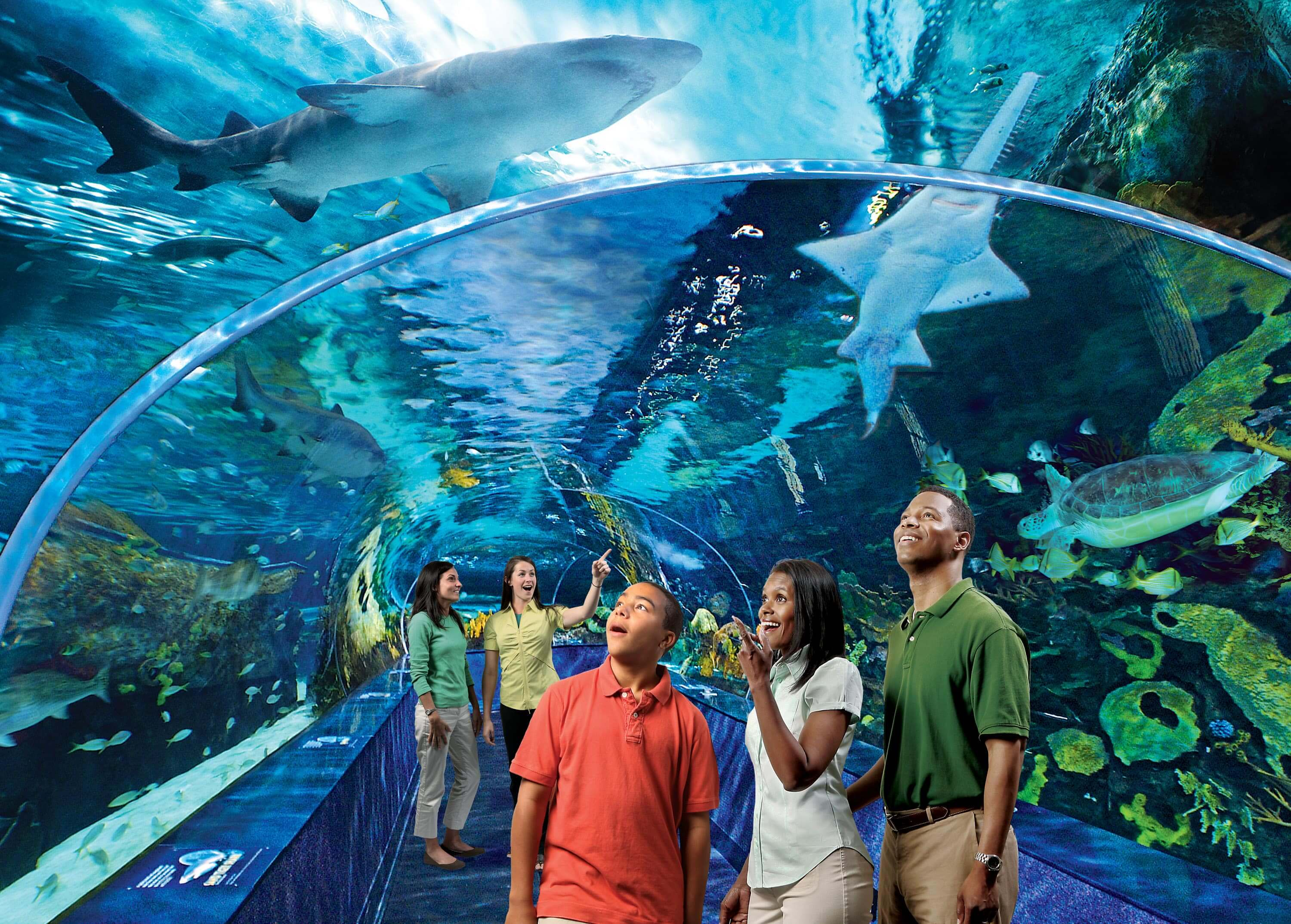To discount a Ripley's Aquarium Gatlinburg coupon, click on the code provided. During payment copy, the Ripley's Aquarium Gatlinburg coupon code and it will be discounted immediately. Deliver the whole family for a day experience, or live all weekend.