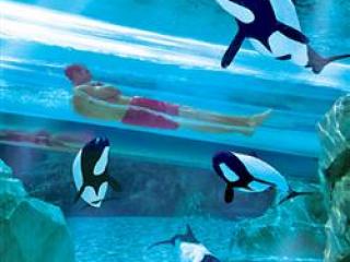 Aquatica Orlando Coupons