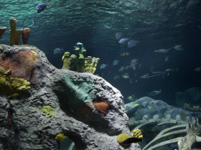 Book tickets to SEA LIFE Kansas City Aquarium online in advance to guarantee entry and save up to 15% off the door price! SEA LIFE Kansas City Aquarium is the perfect destination for a group gathering, reunion or party! Save even more when you pre-book a group of 15 or more.