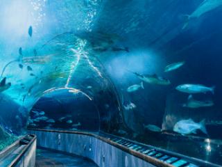 Aquarium of the Bay San Francisco Coupons