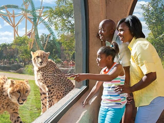 Discount coupons for busch gardens tampa florida