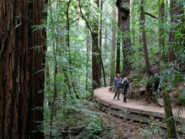 Muir Woods Sonoma Wine And Beer Tour Coupons San