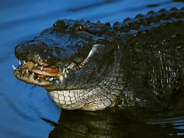 Gatorland Night Shine Tour Coupons And Discounts Save 3