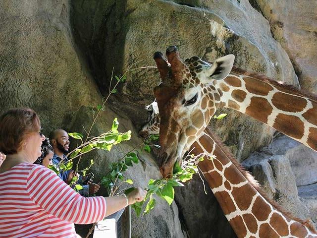 Philadelphia Zoo Coupons