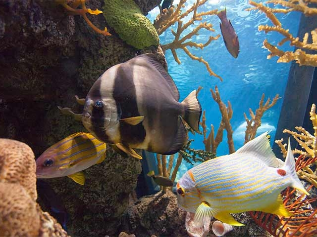 Shedd Aquarium Coupons and Discounts | Chicago, IL